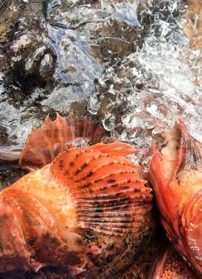 Els Pescadors Barcelona